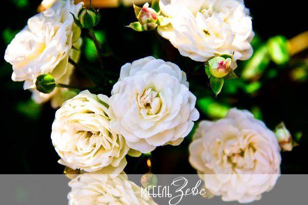 Красивые цветы для кухни