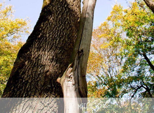 Натуральная древессина