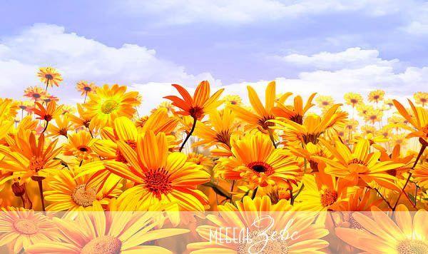 Оранжевые цветы, фотопечать
